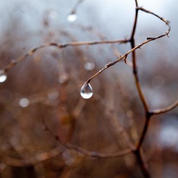 Téli természet