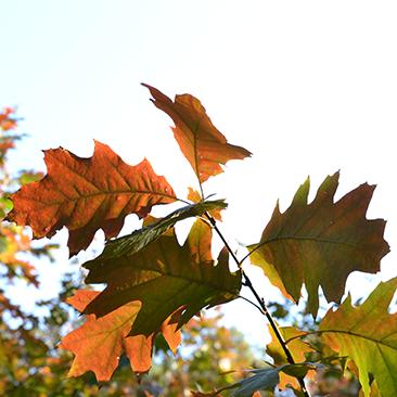 Varázslatos ősz Pósteleken